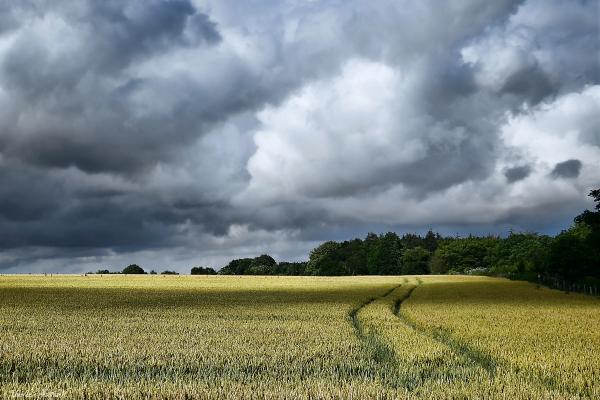 champ, blé, moisson, été, nuages, campagne, sillon