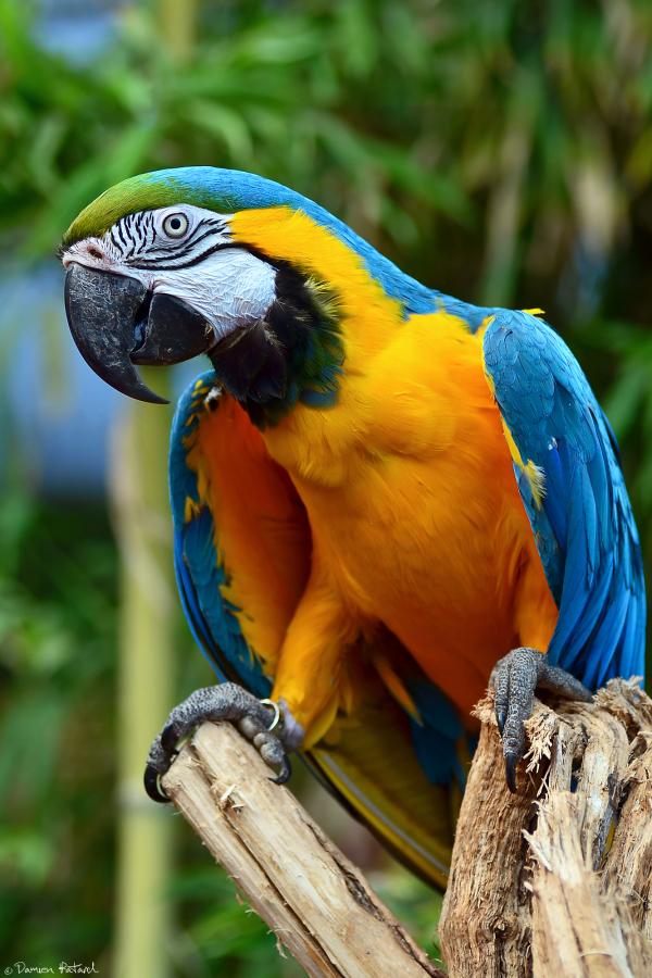 ara, yellow, blue, cerza, perroquet, parrot, zoo