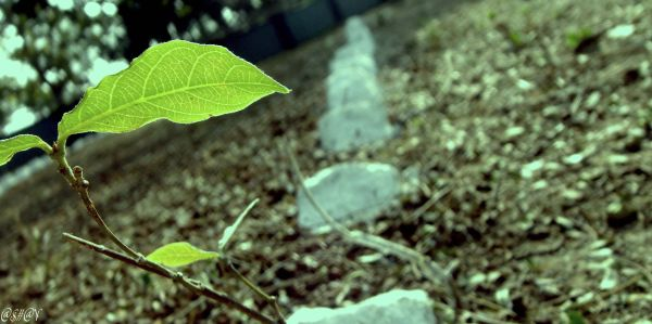 """""""A single sapling in an otherwise barren land.."""""""