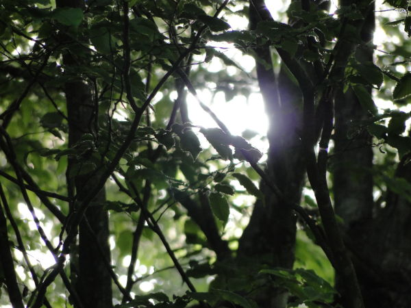 light beam through leaves