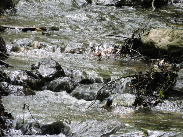 dance of river