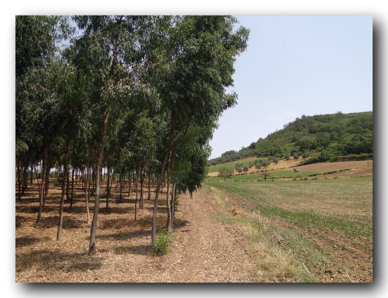 in discipline agriculture