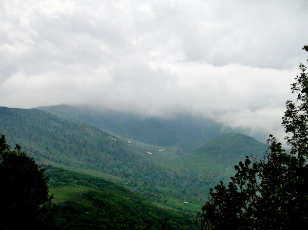 Abr(cloud)forest,shahrood,Iran