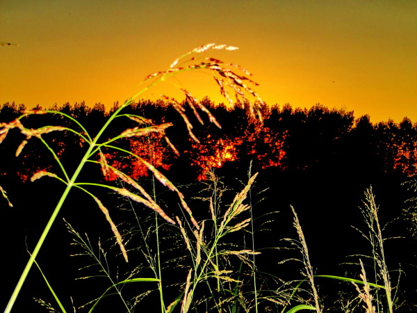 sunset  silouhet  behind trees