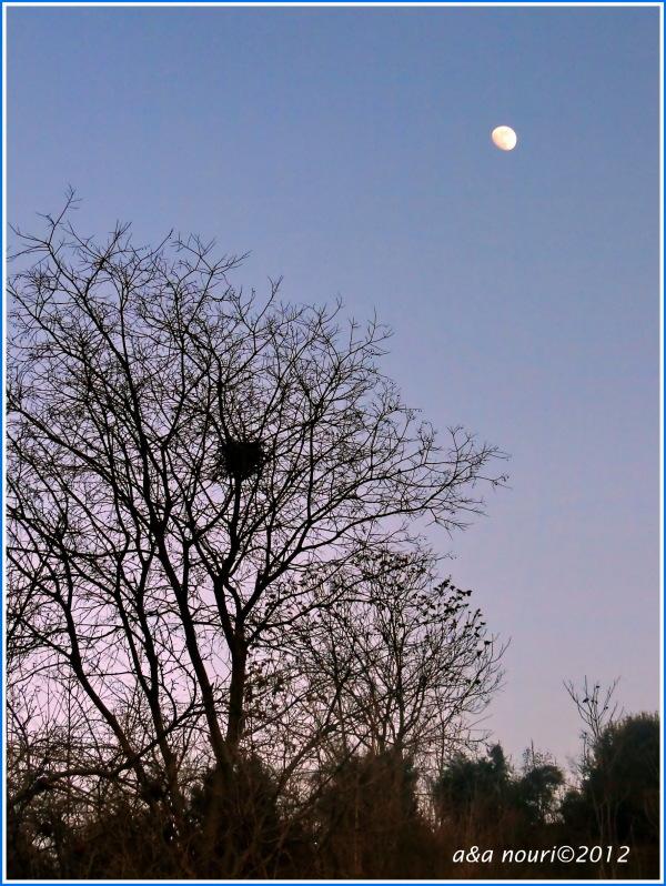 moon in evening