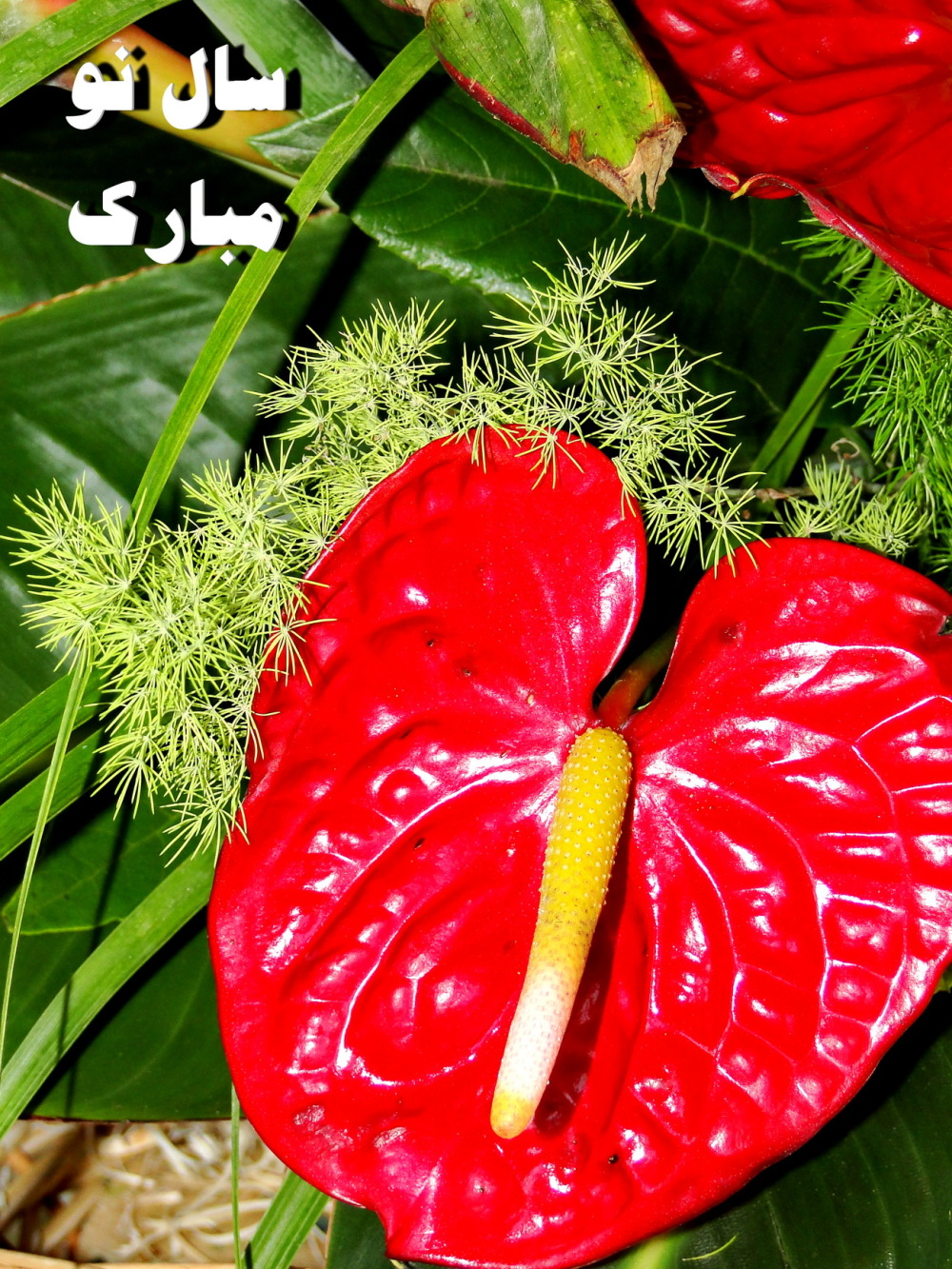 HAPPY NEW IRANIAN YEAR