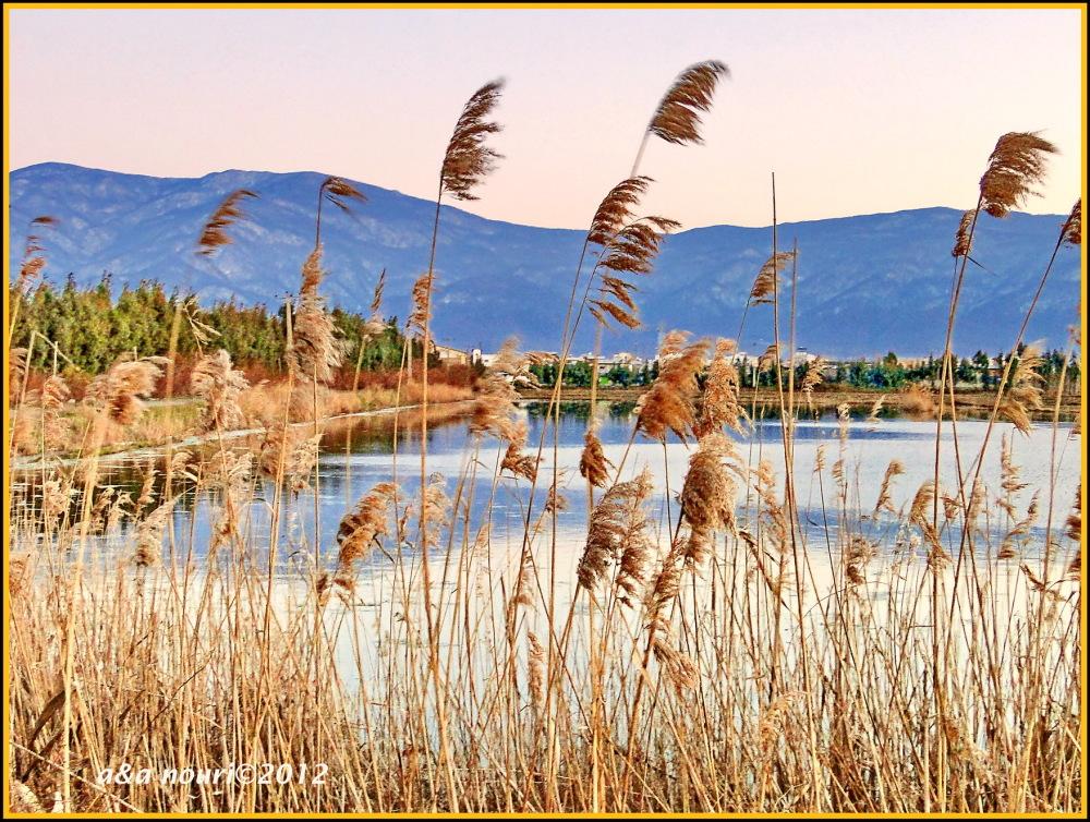near a lake
