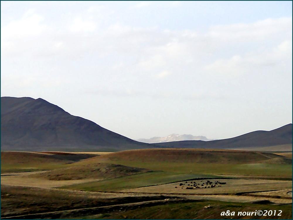 grazing on arid plains