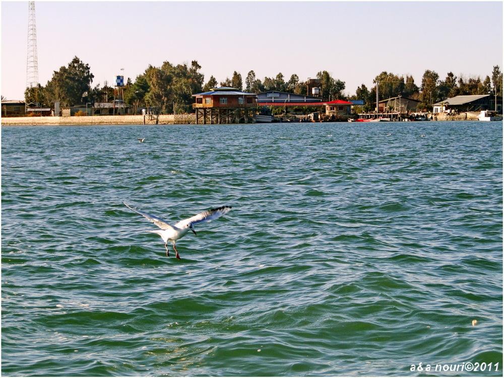landing for fish
