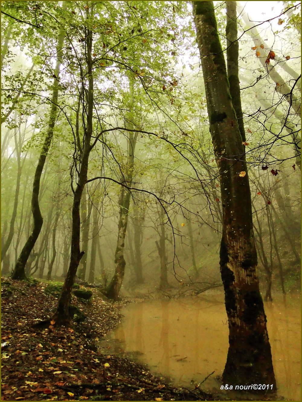forest in fog and heavy rain