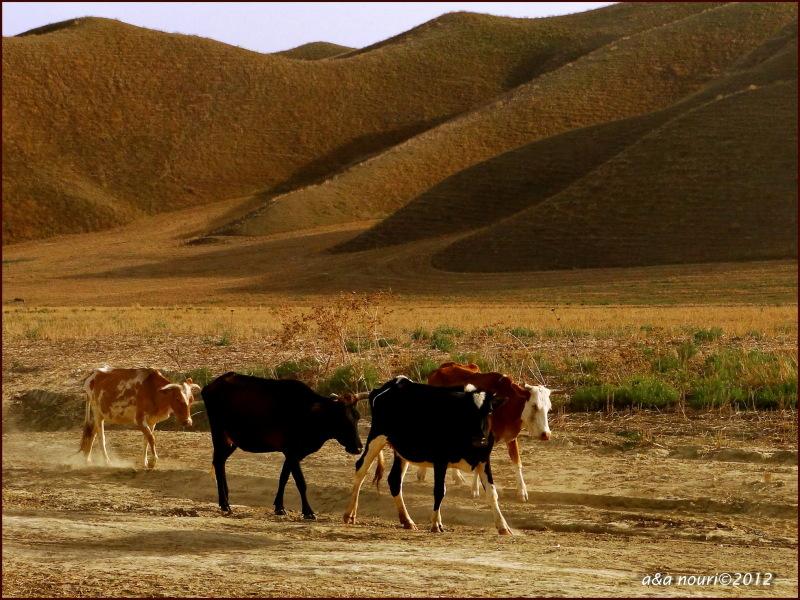march on desert