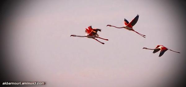 flight in dreams...