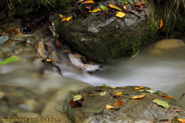 River frolic!