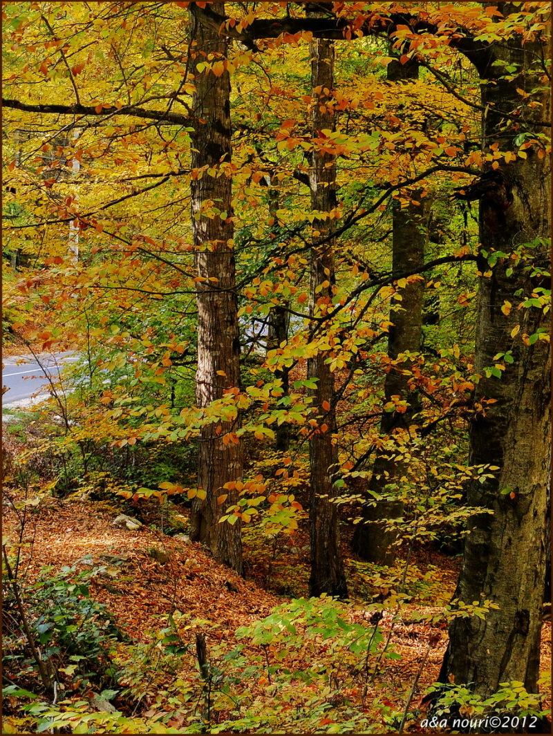 glory of Autumn-2