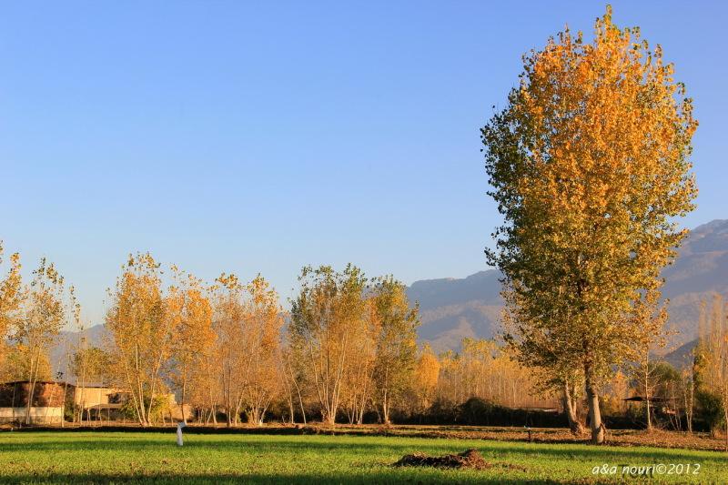 glory of Autumn-6