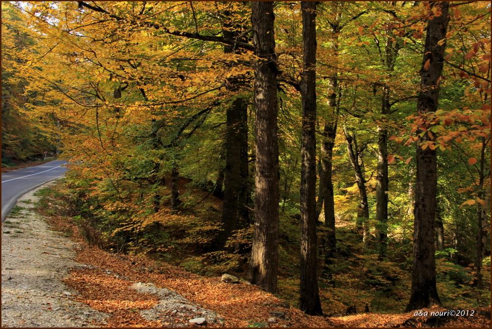 glory of Autumn-8