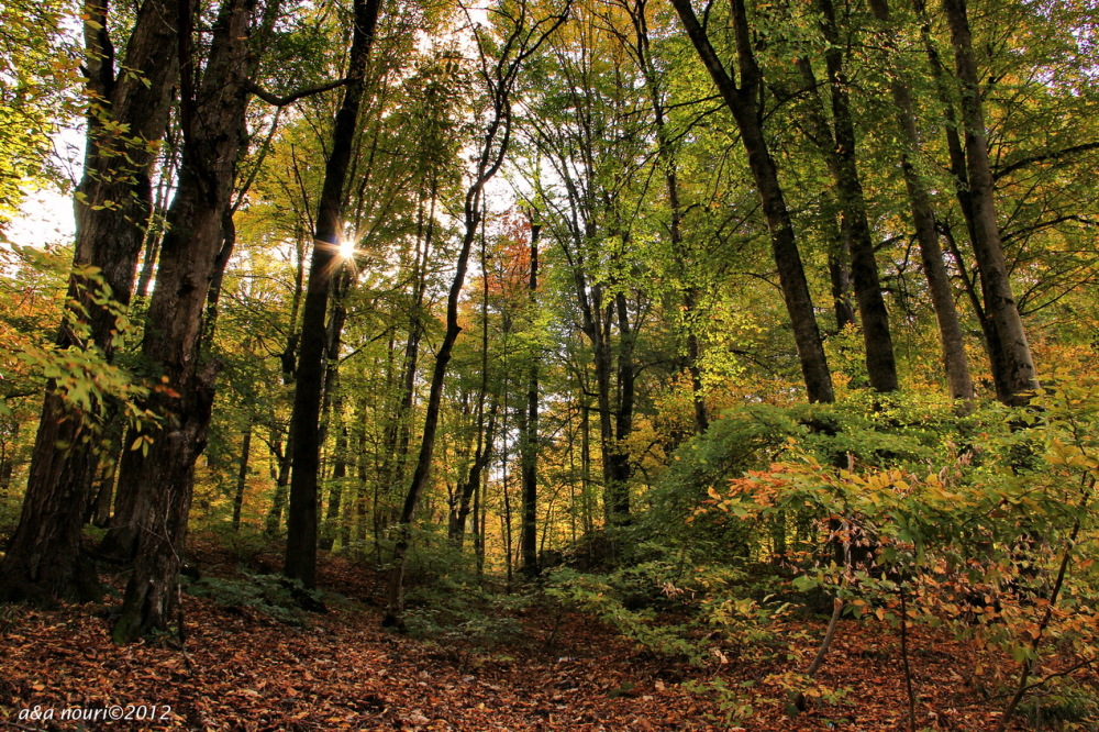 glory of Autumn-10