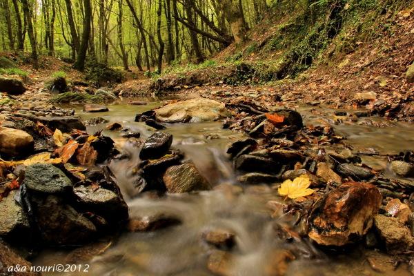 glory of Autumn-13