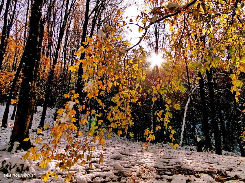 glory of Autumn-20
