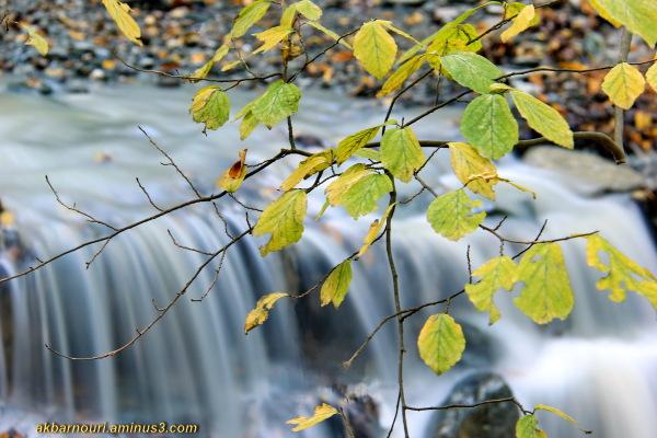 glory of Autumn-12