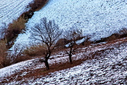Winter's purity-6