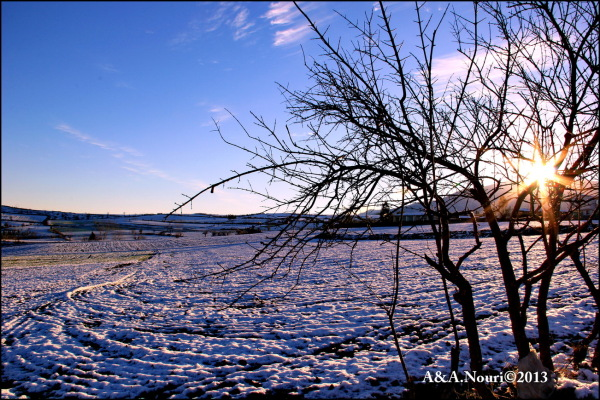Winter's purity-7