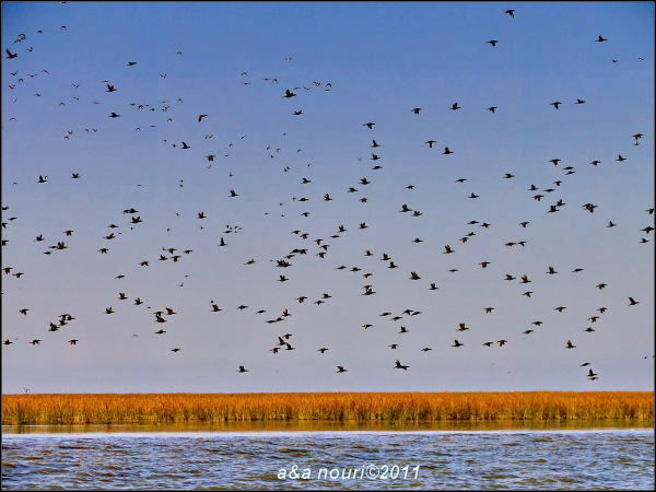 Sea birds over sea