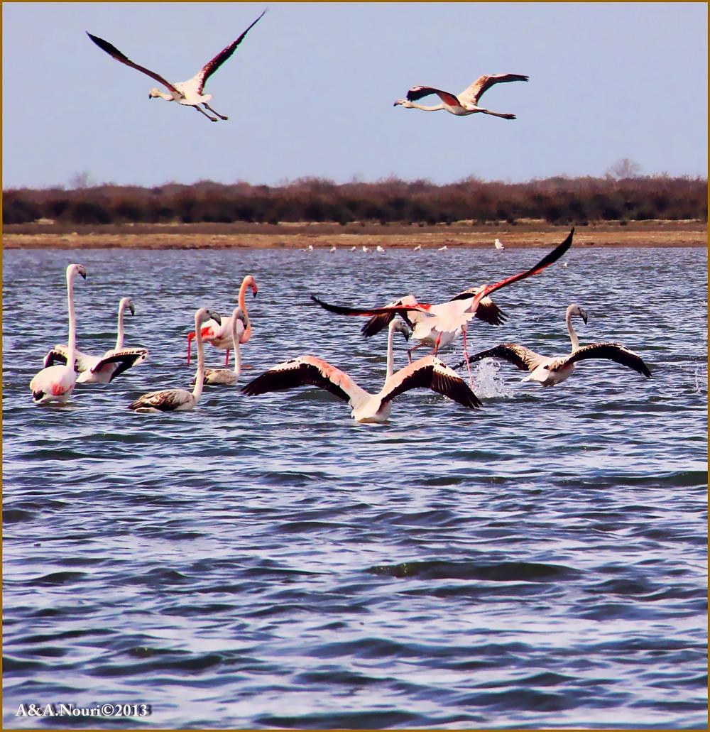 Flamingos' life story-7