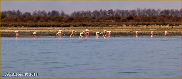 Flamingos' life story-1