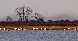 Flamingos' life story-2