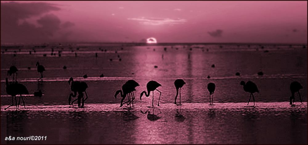 Flamingos' life story-11