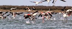 Flamingos' life story-24