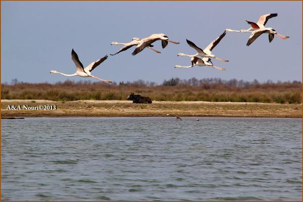 Flamingos' life story-15