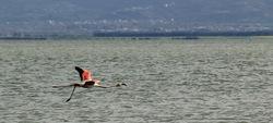Flamingos' life story-23