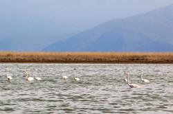 Flamingos' life story-21