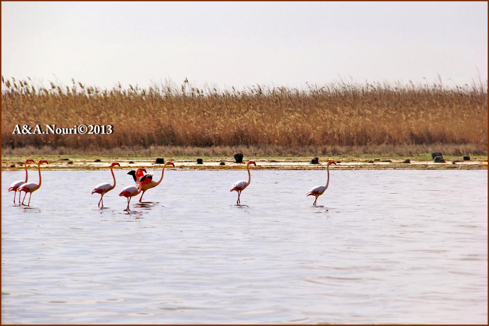 Flamingos' life story-8