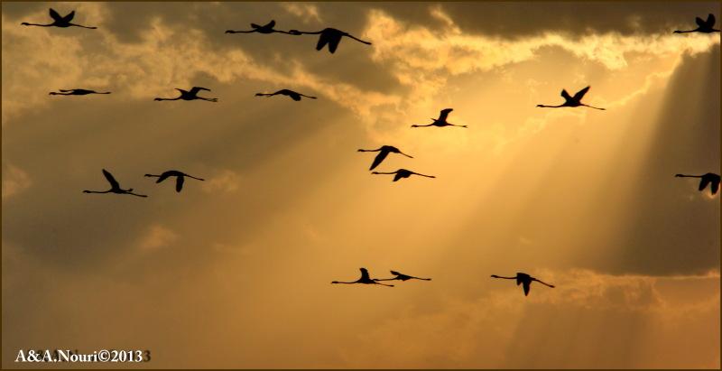 Flamingos' life story-18