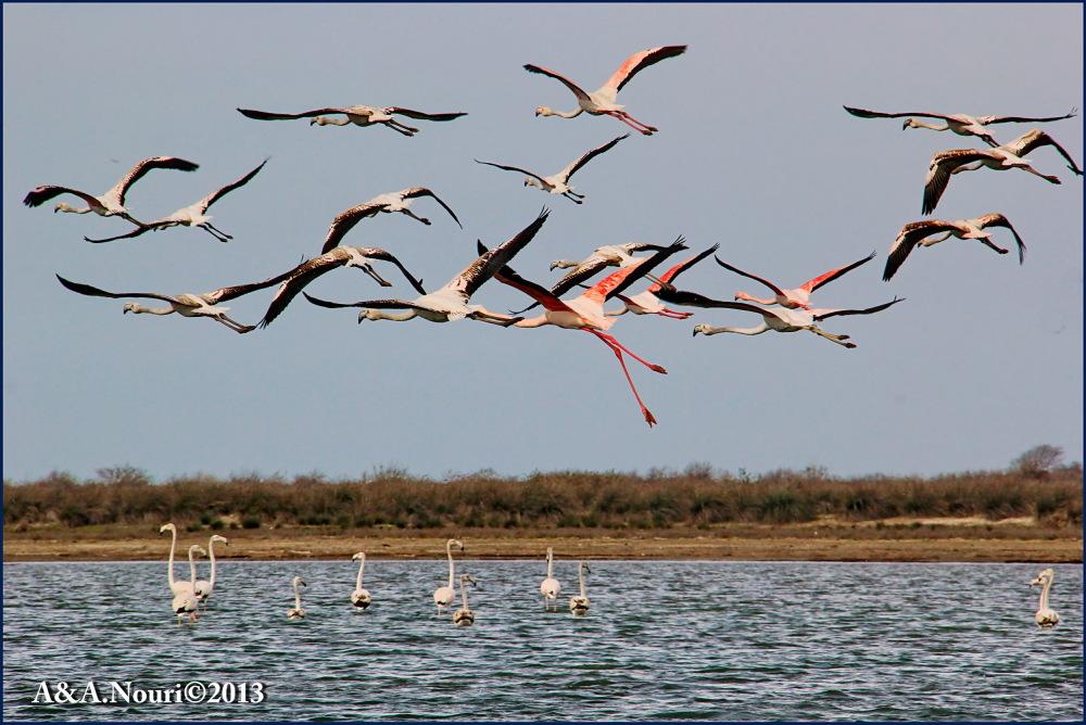 Flamingos' life story-19