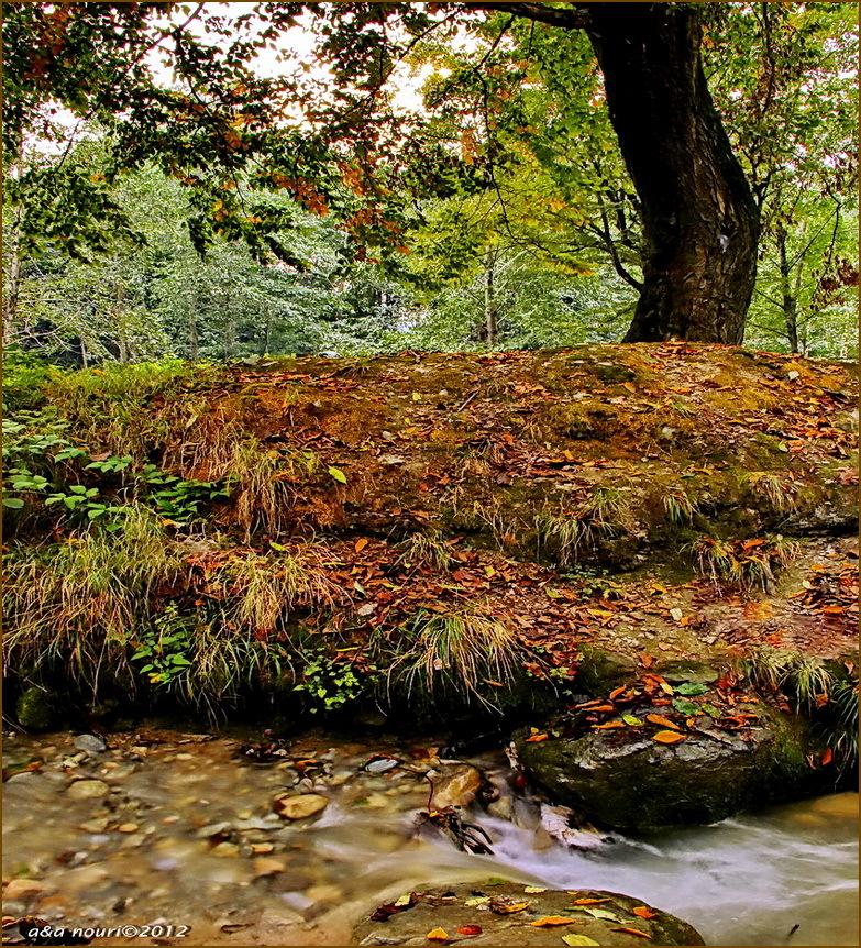 Glory of Autumn-26