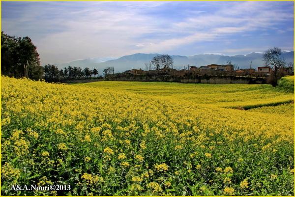 Yellow paradise