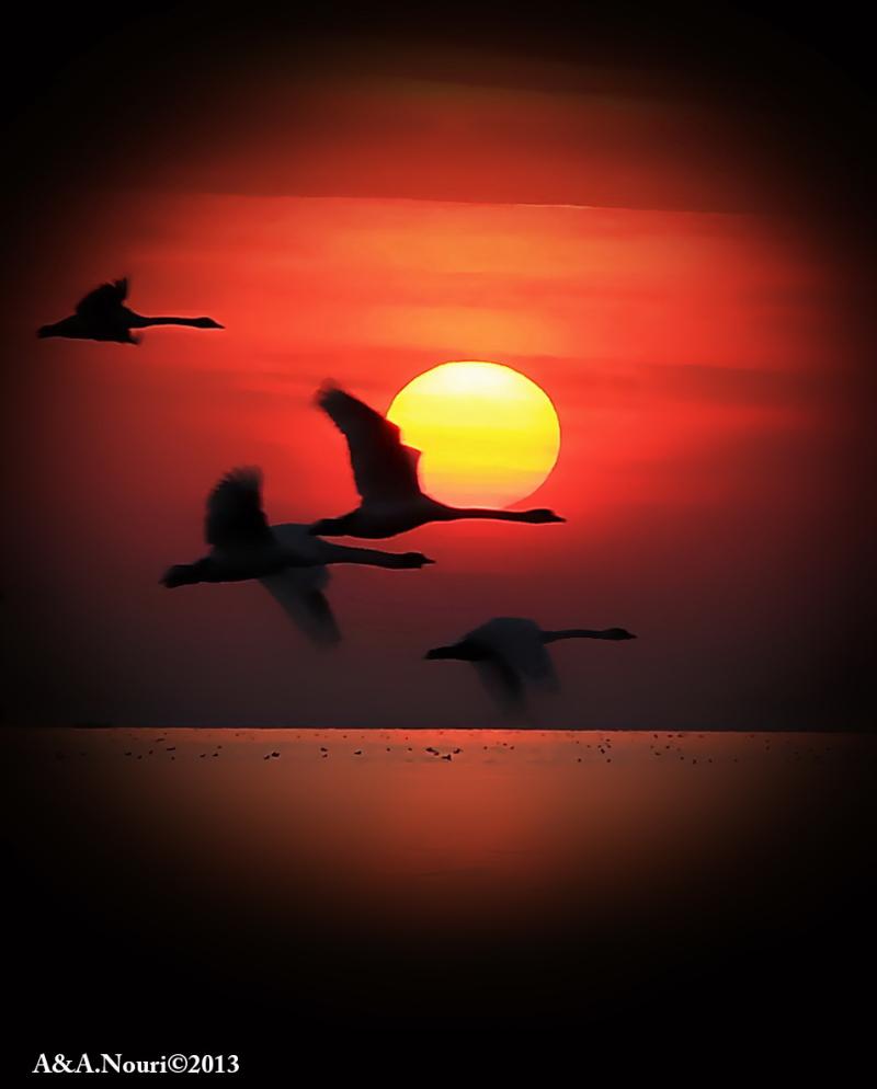sunset clamor