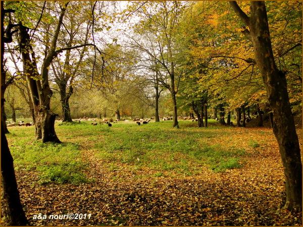 glory of Autumn-31