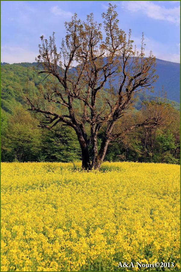 Freshness of Spring-2