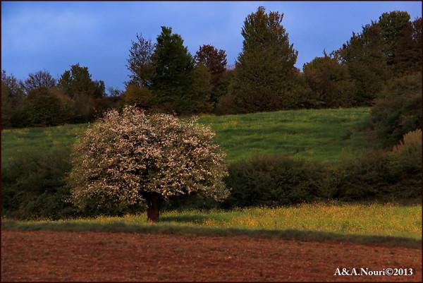 Freshness of Spring-17