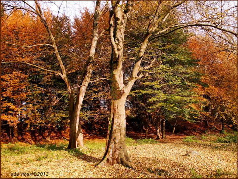 glory of Autumn-30