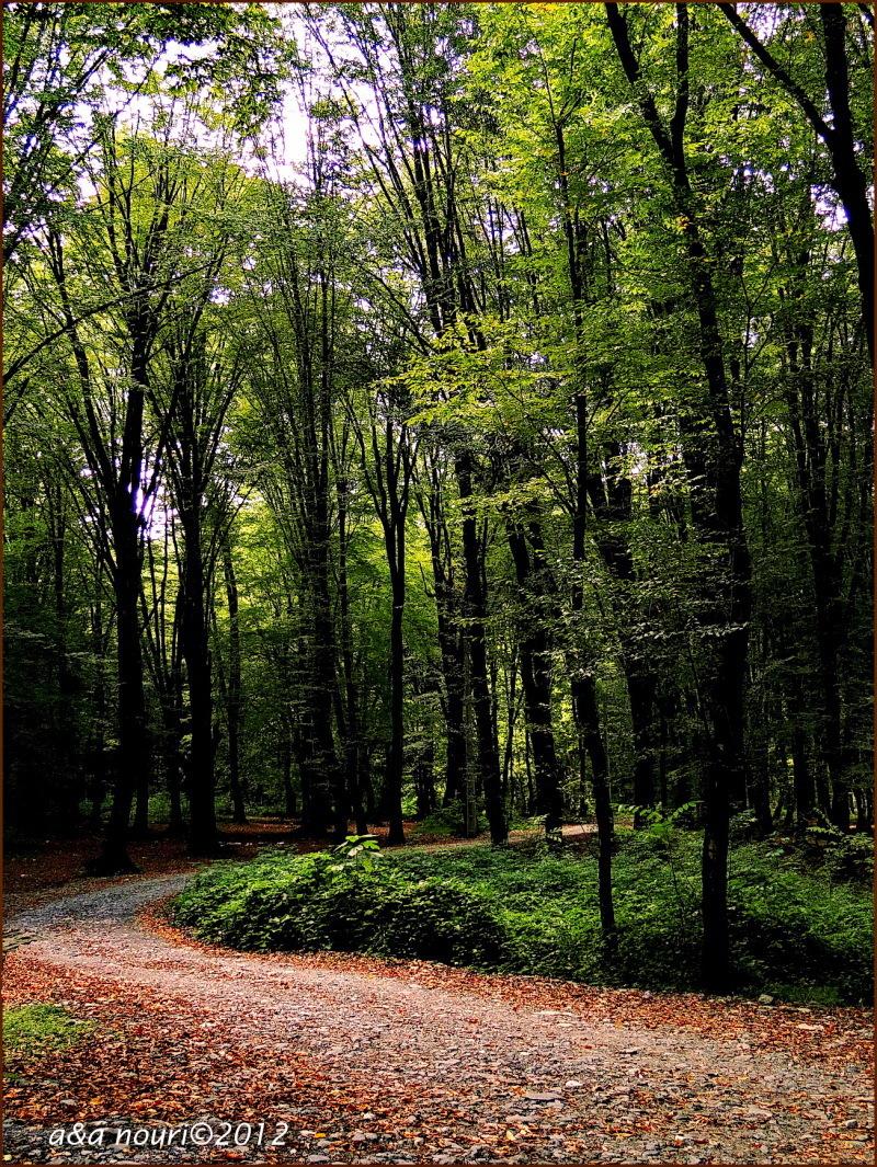 road in green
