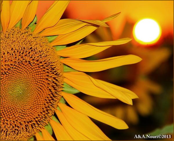 pointing sun