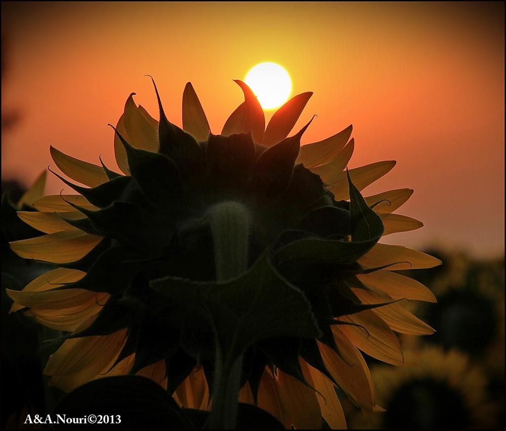 kissing sun