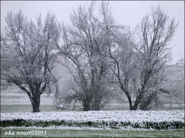 winter snowing