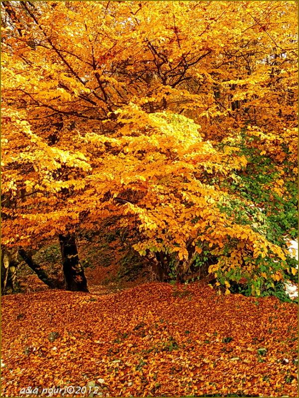glory of Autumn-120